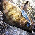 masaさんの千葉県千葉市での釣果写真