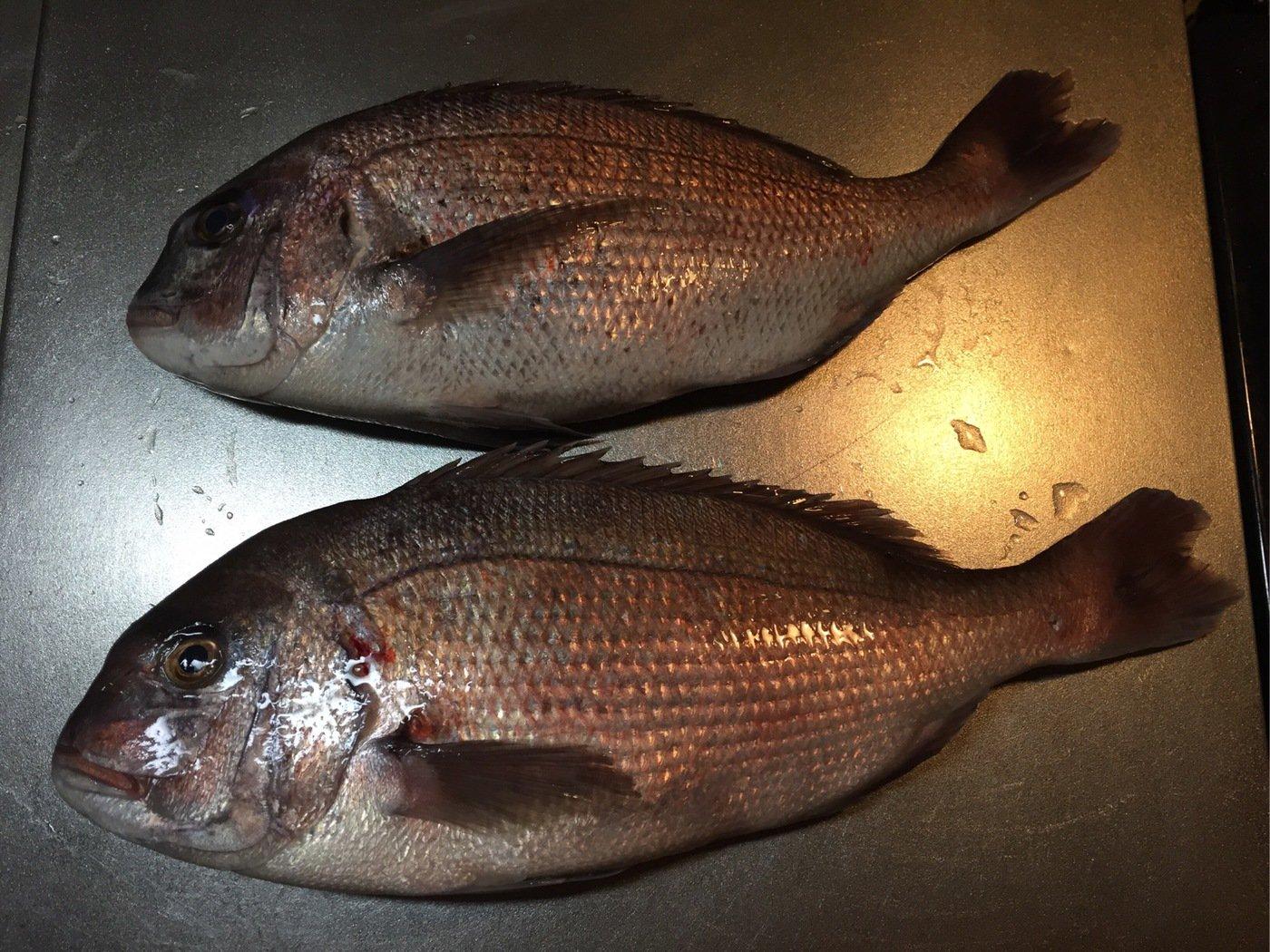 みっちゃんさんの投稿画像,写っている魚はマダイ