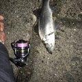 サカやんさんの高知県土佐市での釣果写真