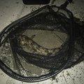 ひこすけさんの宮城県多賀城市でのアイナメの釣果写真