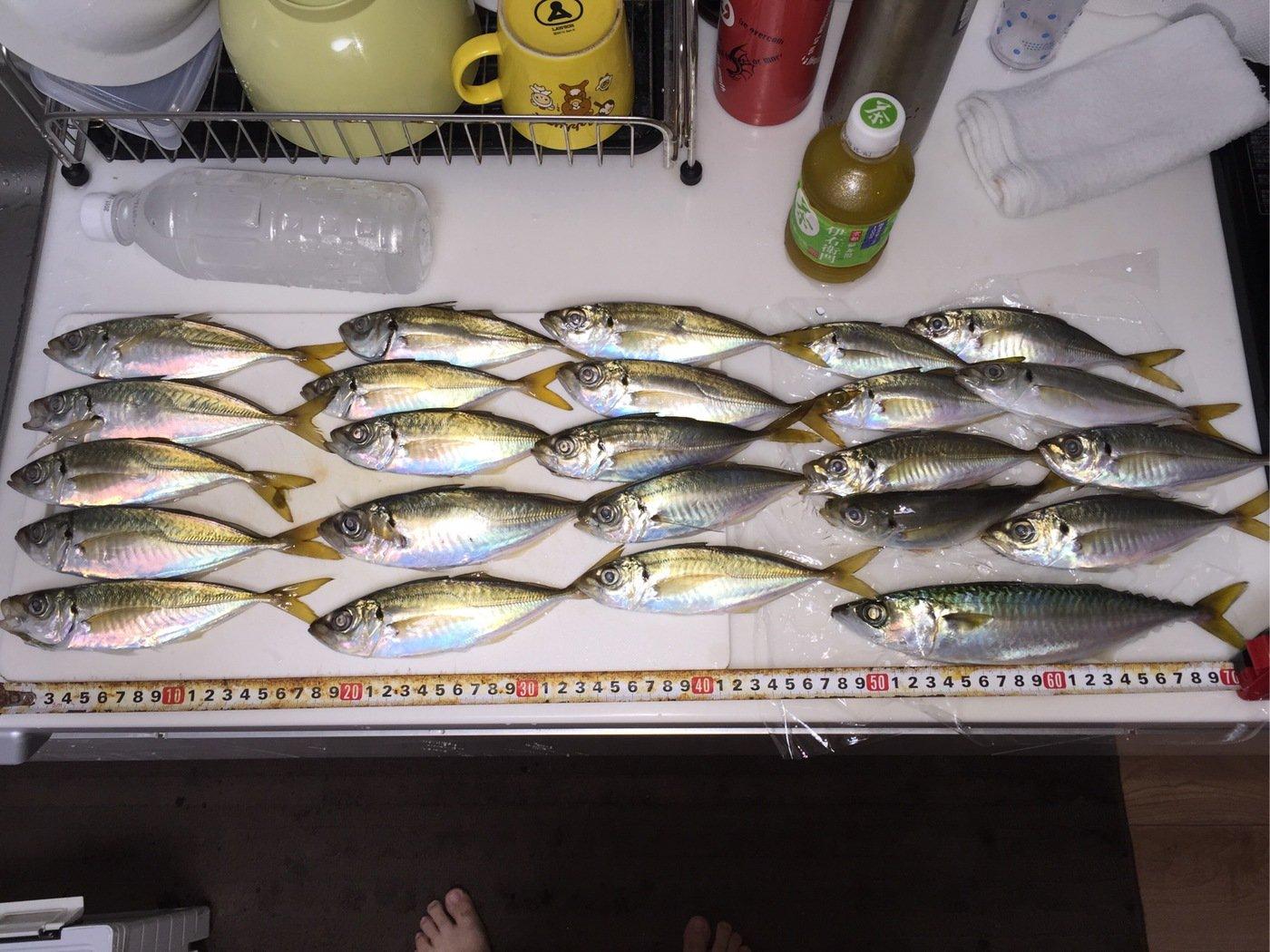 タクヤさんの投稿画像,写っている魚はアジ