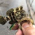 yoshiさんの沖縄県うるま市での釣果写真