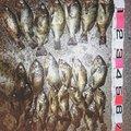 しまさんの山口県大島郡での釣果写真