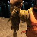 けんじぃさんの長崎県西彼杵郡での釣果写真
