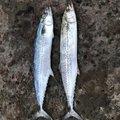 Shinya さんの宮崎県日南市での釣果写真