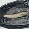 cool-0314さんの新潟県柏崎市での釣果写真