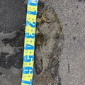 釣りジャンキーさんの宮崎県でのヒラメの釣果写真