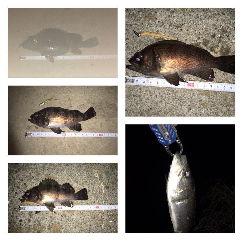 じーじさんの投稿画像,写っている魚はメバル