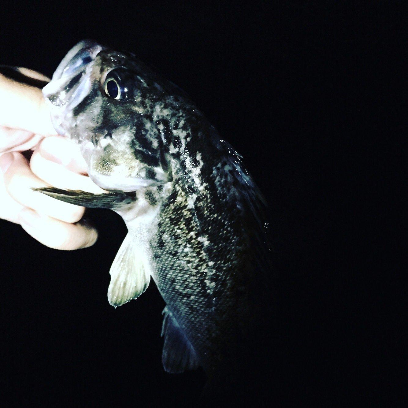はなはらさんの投稿画像,写っている魚は