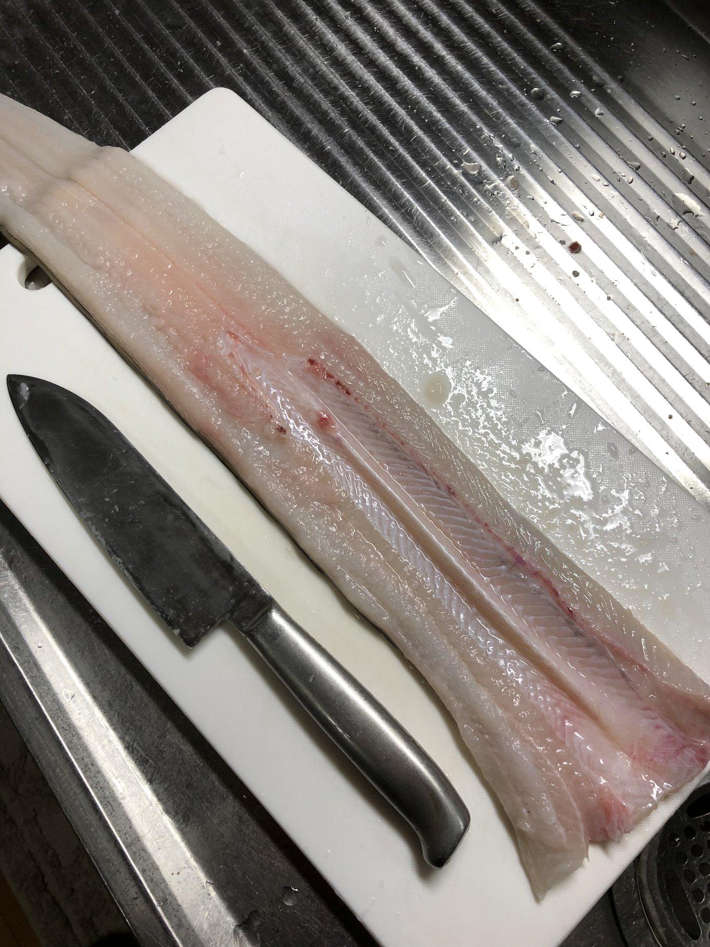 ひろひさんの投稿画像,写っている魚はアナゴ