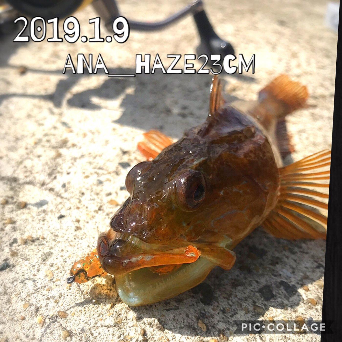 kaito@さんの投稿画像,写っている魚はマサバ,アナハゼ