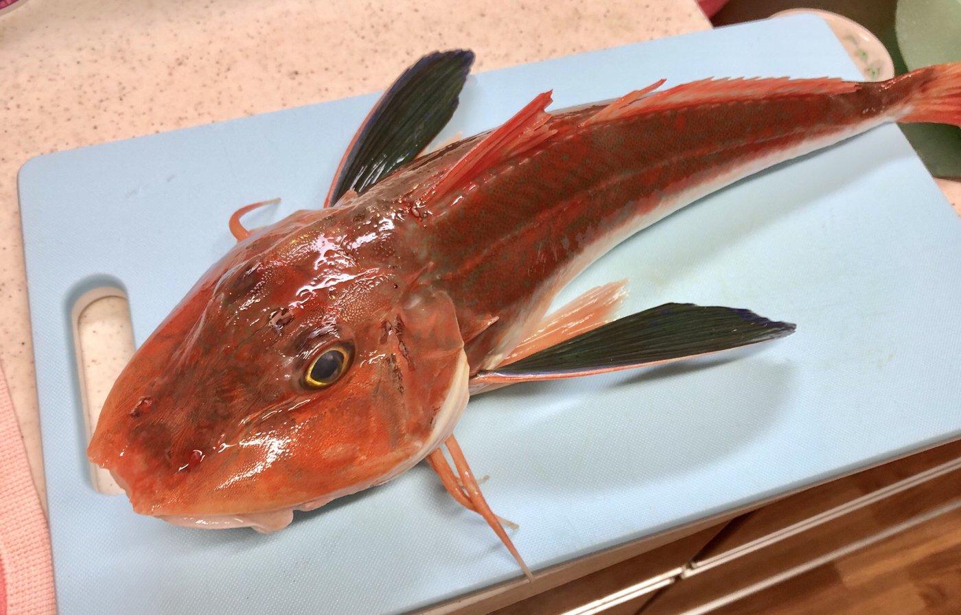 ボンカーゴさんの投稿画像,写っている魚はホウボウ