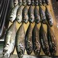 ユースケさんの福岡県糸島市での釣果写真