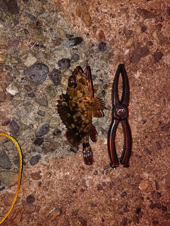 やまっこさんの投稿画像,写っている魚はカサゴ
