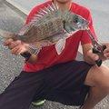 きたしゅーさんの沖縄県南城市でのクロダイの釣果写真