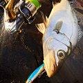 いそら丸さんの長崎県平戸市での釣果写真