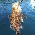 Awawaさんの大分県佐伯市での釣果写真