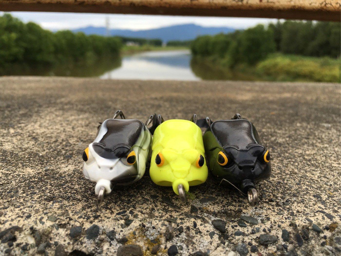 Murakameepさんの投稿画像,写っている魚はライギョ
