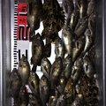 ゆうじさんの石川県七尾市での釣果写真