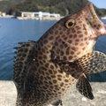 エソさんの宮崎県延岡市での釣果写真
