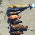 た た たさんの岩手県宮古市での釣果写真
