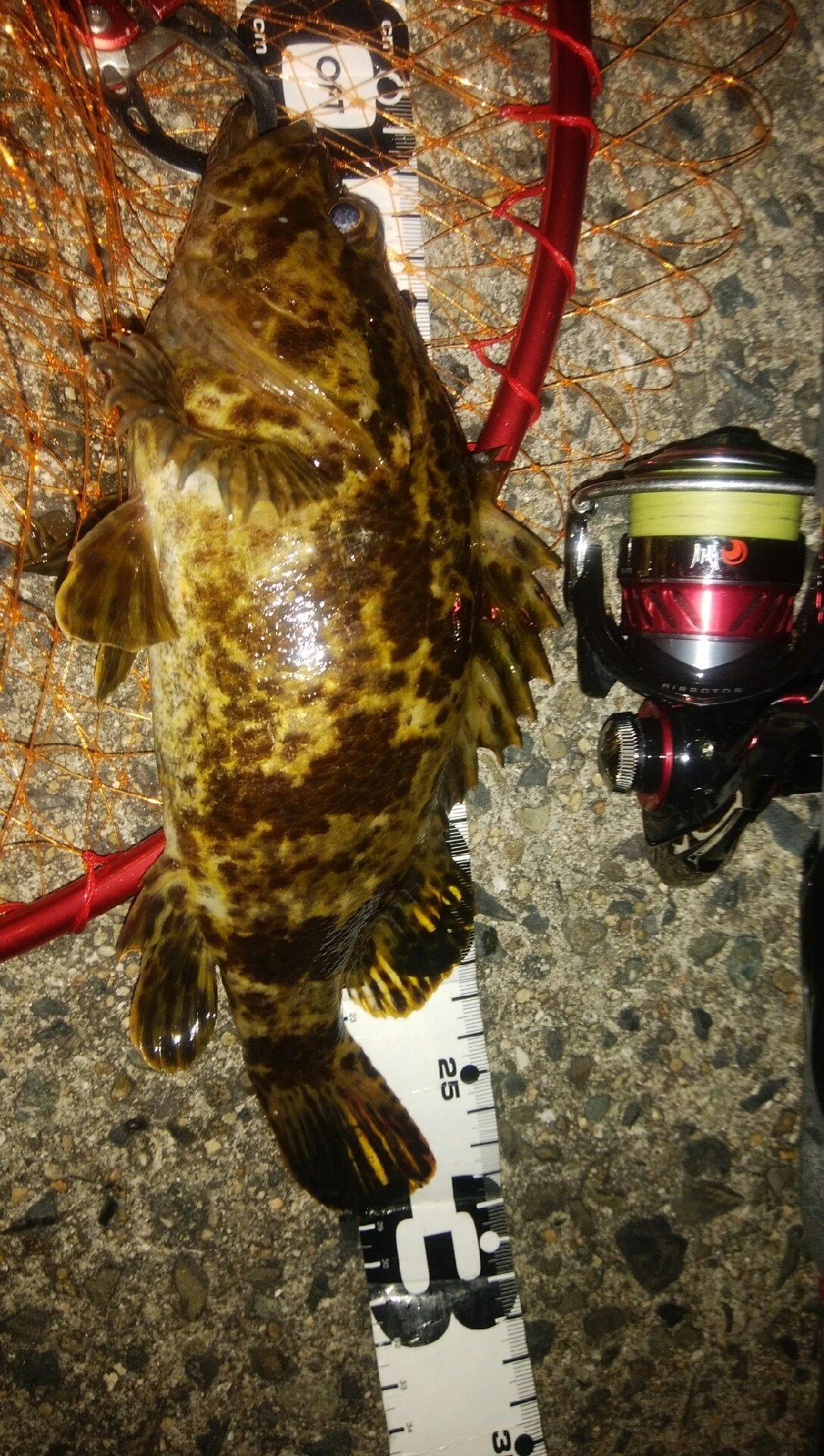 穴吹あきひろさんの投稿画像,写っている魚はタケノコメバル