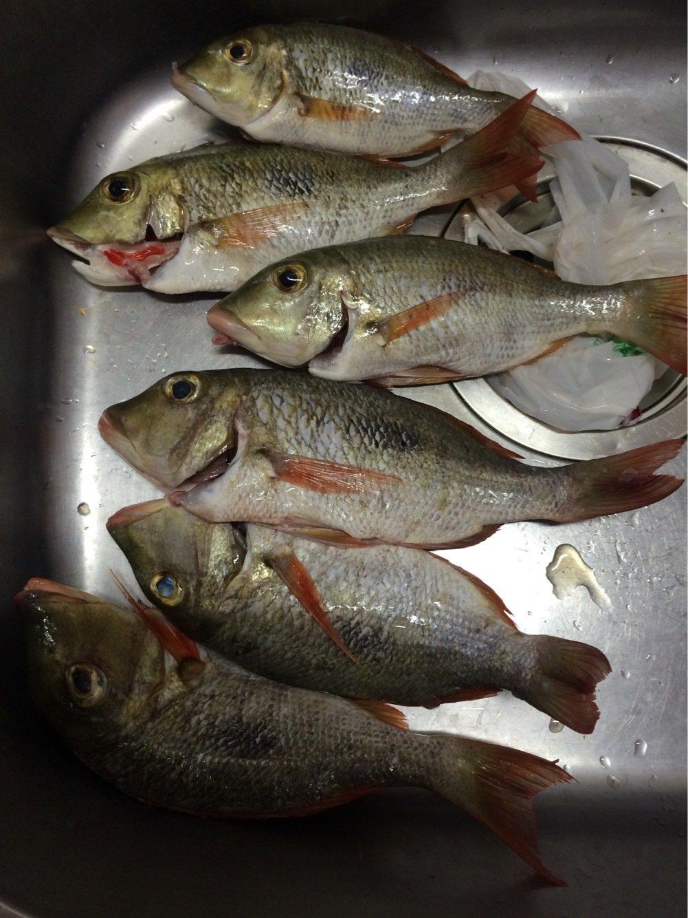 たくやさんの投稿画像,写っている魚はイッテンフエダイ