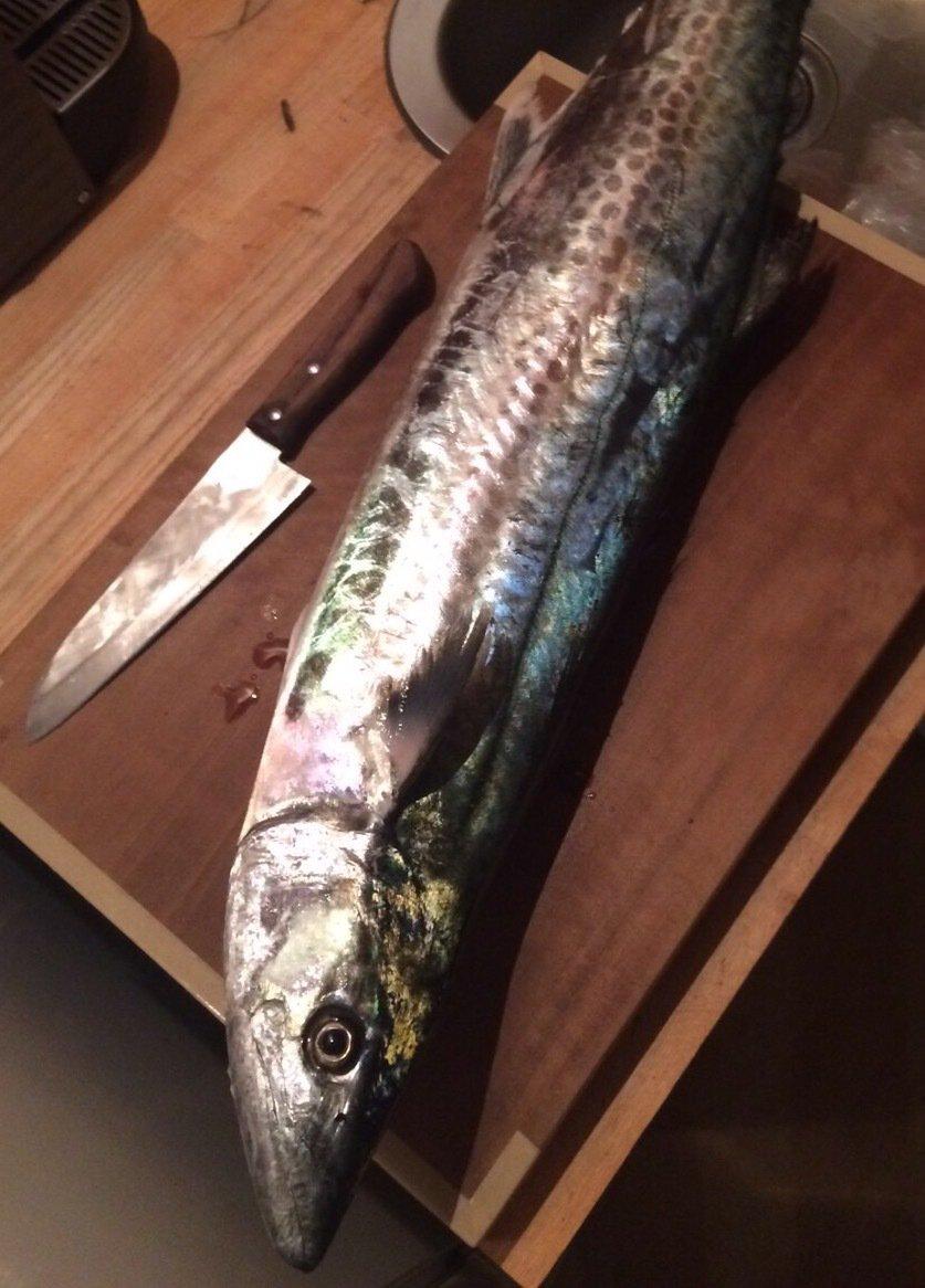 其処乃所 宜君さんの投稿画像,写っている魚はサワラ
