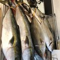 Gさんの福岡県糸島市での釣果写真