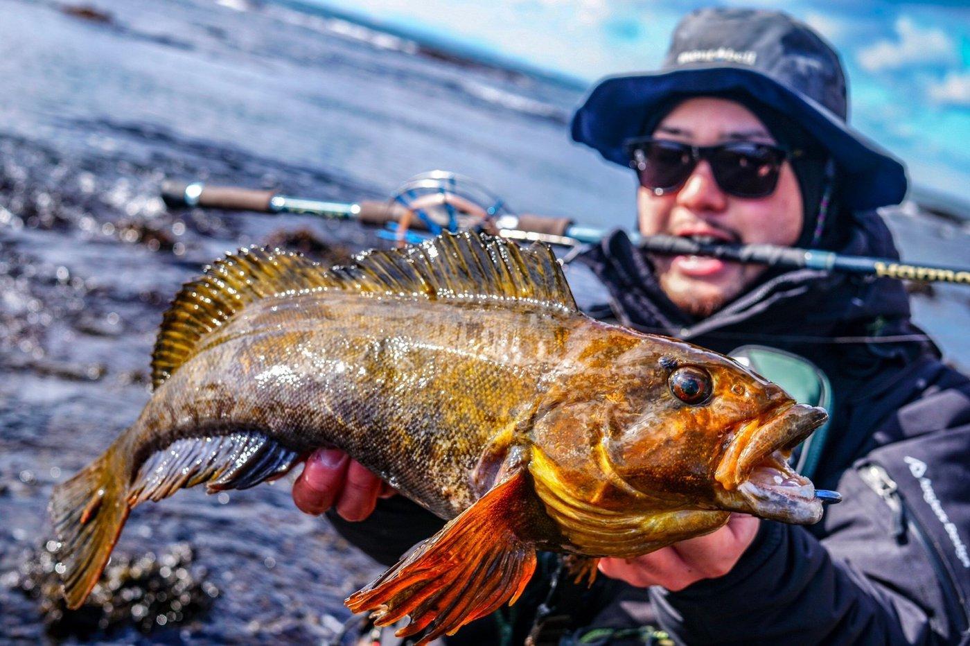 ヒ グさんの投稿画像,写っている魚はアイナメ