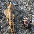 カメさんの長崎県諫早市での釣果写真