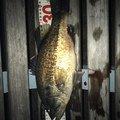 雅洋さんの滋賀県草津市での釣果写真