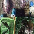 なおさんの高知県宿毛市での釣果写真