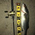 テンカスクンさんの佐賀県三養基郡での釣果写真