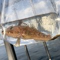 AKIさんの広島県安芸郡での釣果写真
