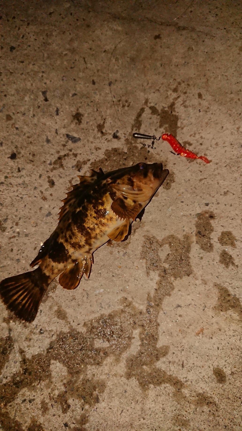 フォーさんの投稿画像,写っている魚は