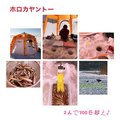 あーちゃんさんの北海道広尾郡での釣果写真
