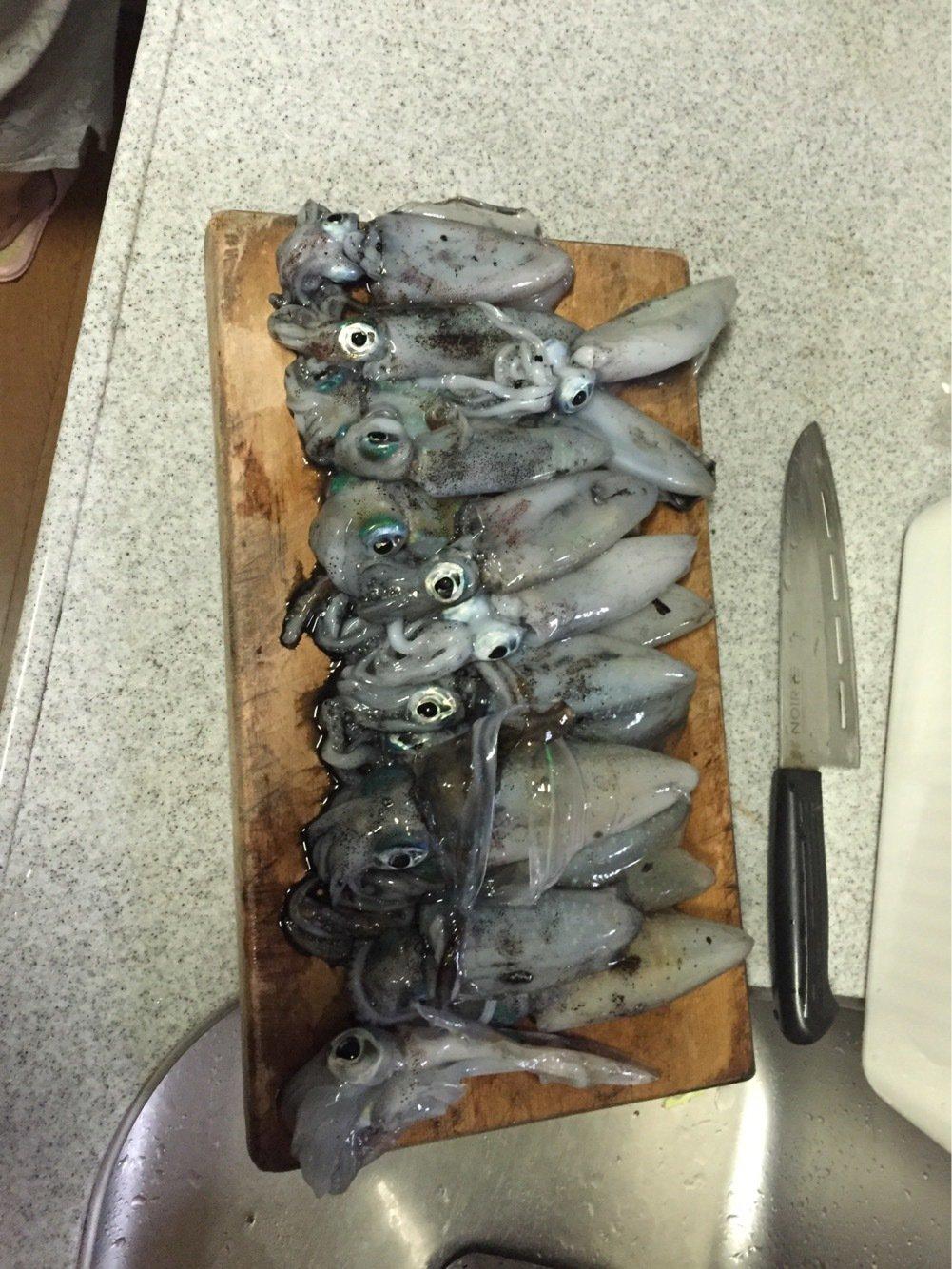 ペロさんの投稿画像,写っている魚はアオリイカ