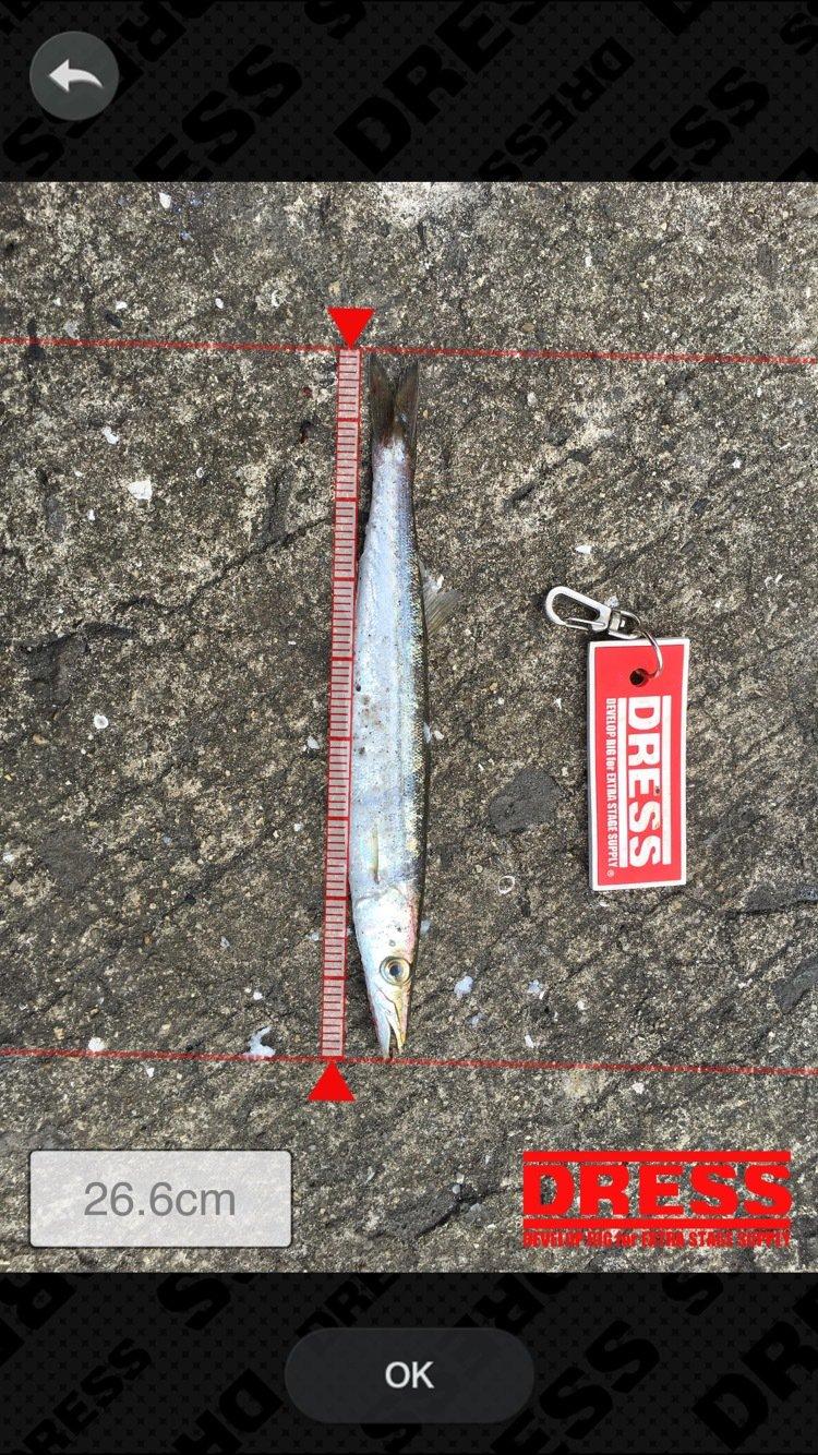 まいこさんの投稿画像,写っている魚はカマス