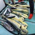 eijiさんの沖縄県石垣市での釣果写真