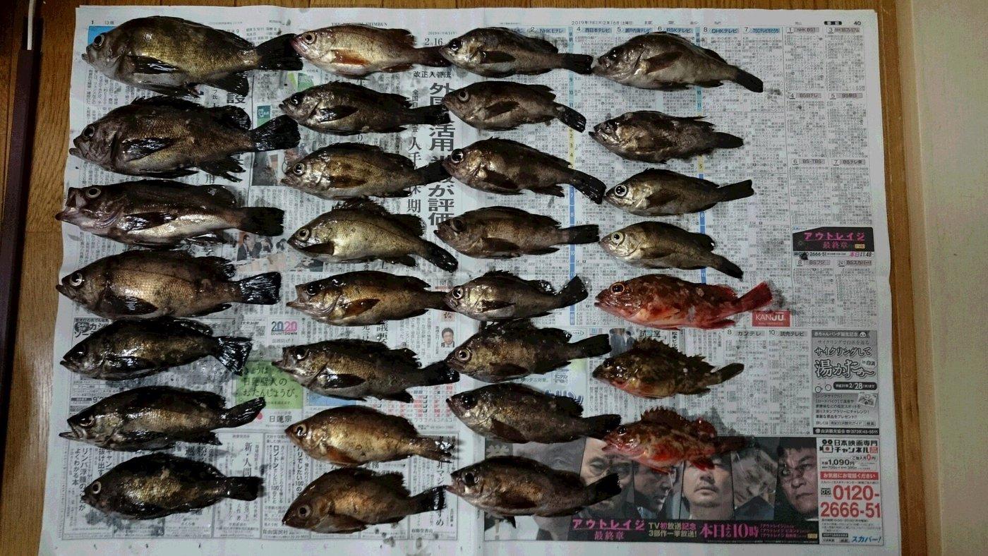 パーマン1号さんの投稿画像,写っている魚はメバル,カサゴ