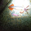 MasaKawaさんのスルメイカの釣果写真