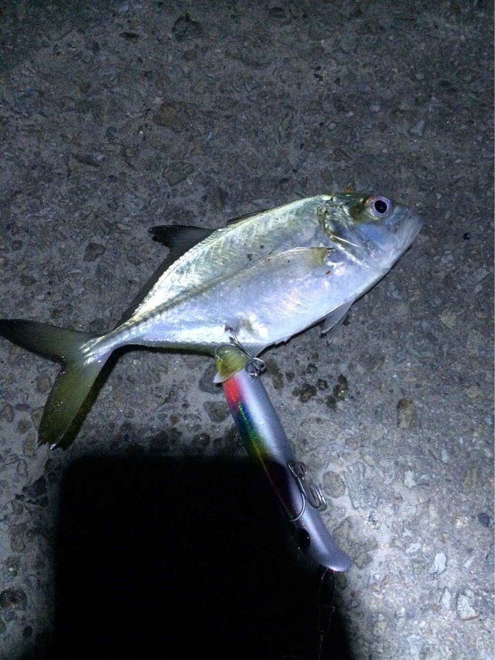 ぺろさんさんの投稿画像,写っている魚はギンガメアジ