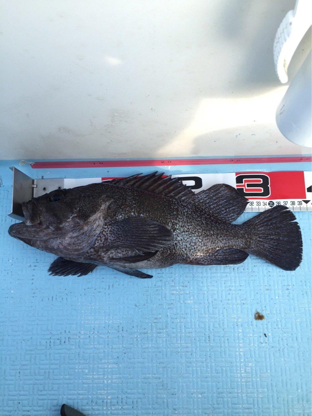 海碧丸さんの投稿画像,写っている魚はクロソイ
