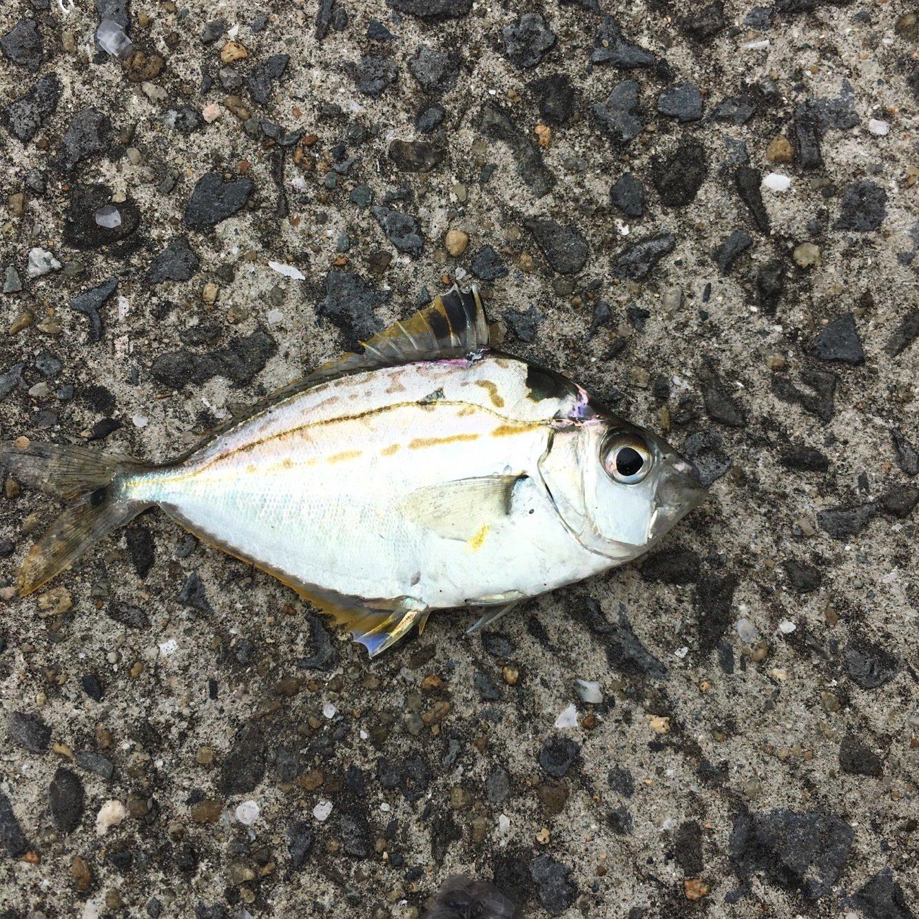 たくさんの投稿画像,写っている魚は