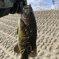 釣りキチ中学生さんの埼玉県戸田市での釣果写真