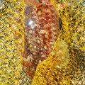 かずくんさんの和歌山県東牟婁郡での釣果写真