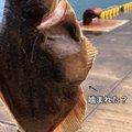 アオリイカオ🦑さんの石川県輪島市での釣果写真