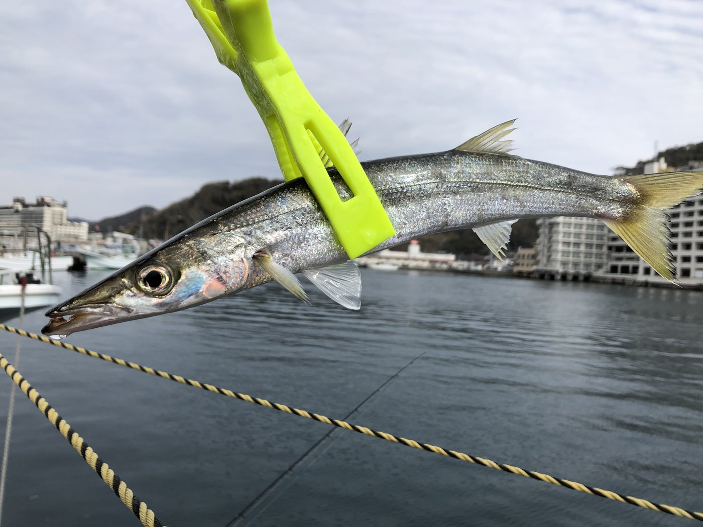 ちゃんぐむさんの投稿画像,写っている魚はカマス