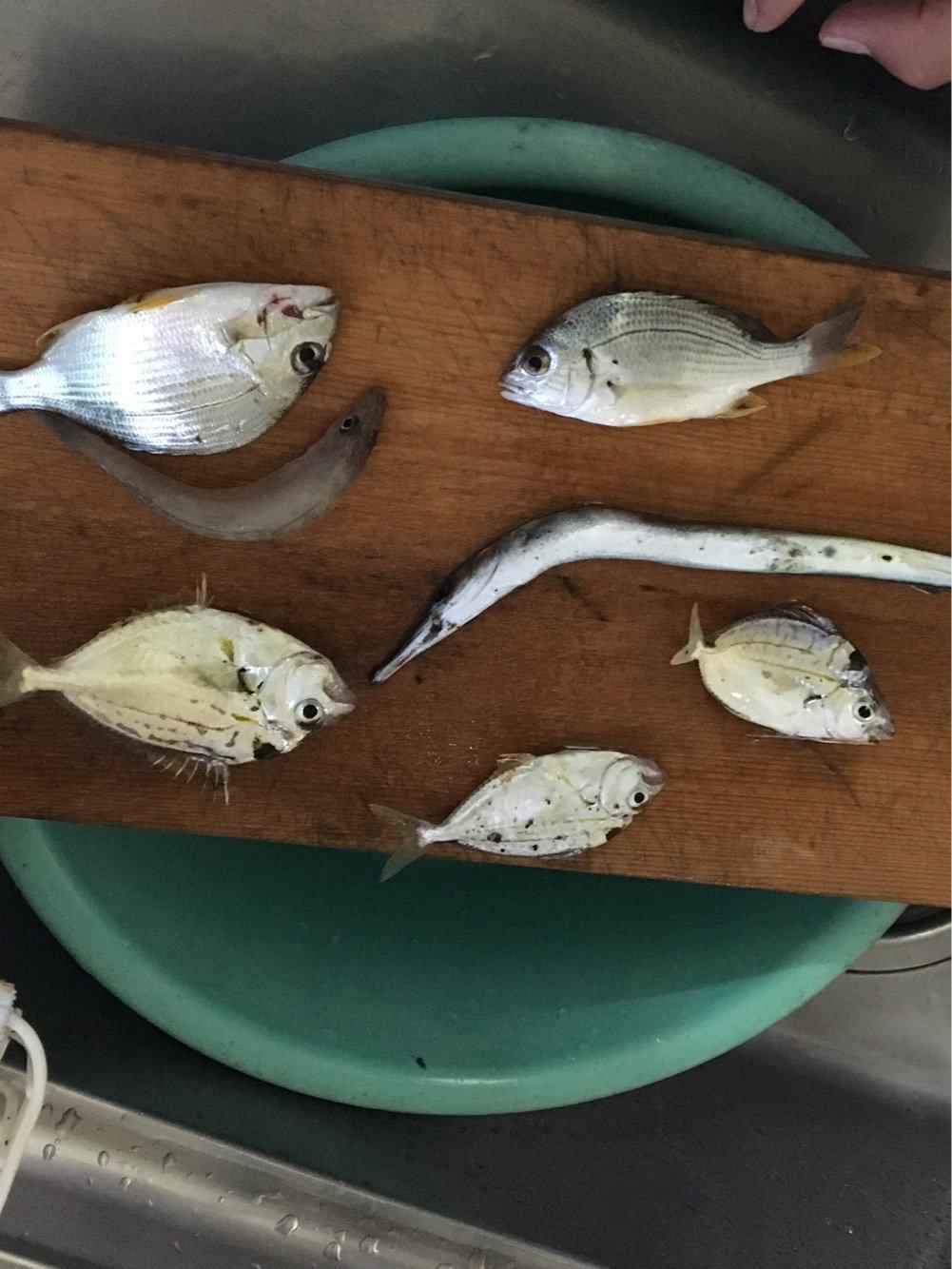 温基さんの投稿画像,写っている魚は